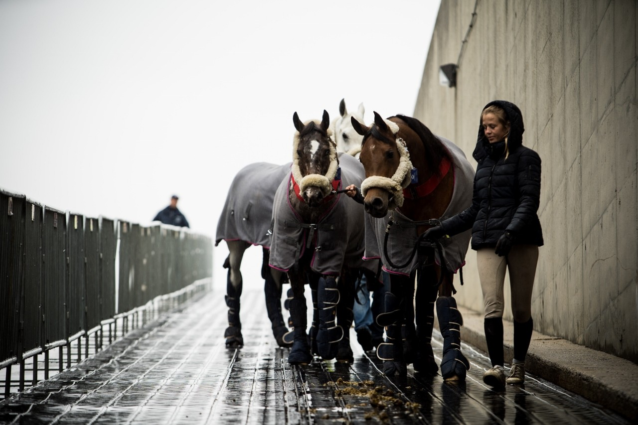 Horses arriving at NYCB LIVE at Nassau Veteran's Coliseum. Photo courtesy of EEM